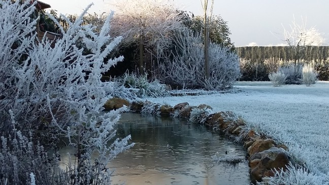 frost in my garden